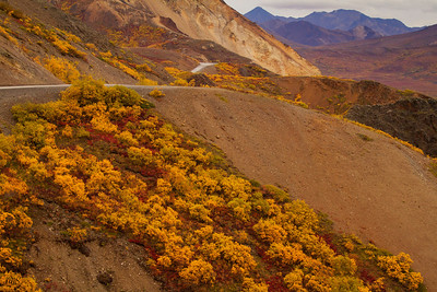Denali Park Road in Autumn