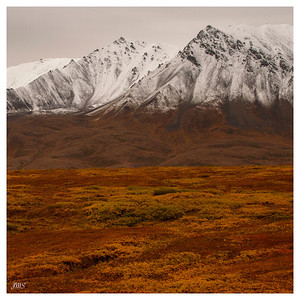 Golden Tundra & Snowy Mountains